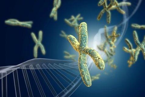Développement dun test ADN